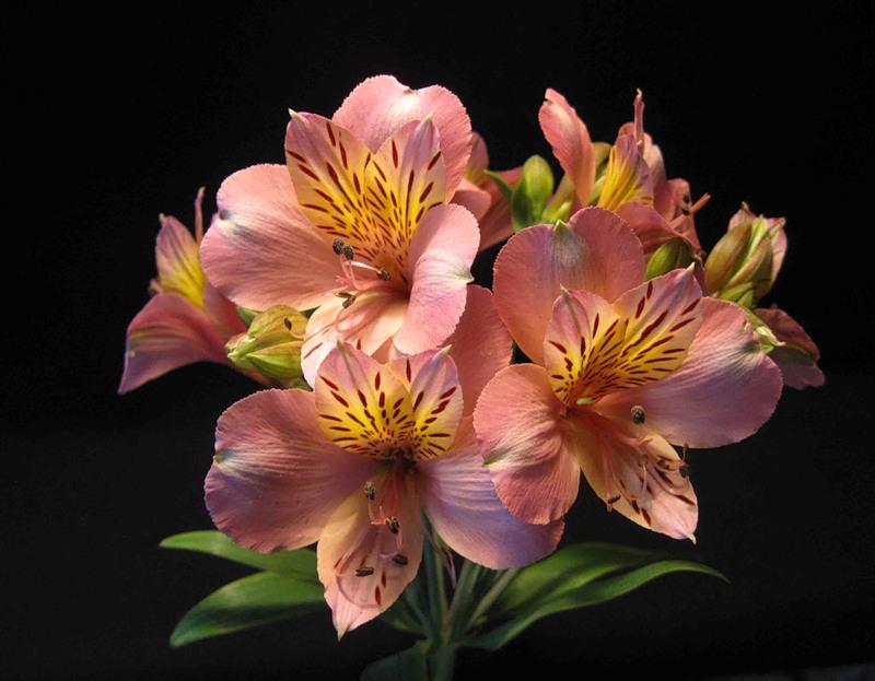 Название цветов в букеты и фото